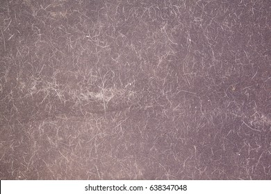 cat or dog hair on the carpet