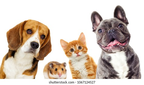 cat and dog and hamster on a white background