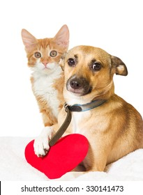 cat,  dog and heart on white background