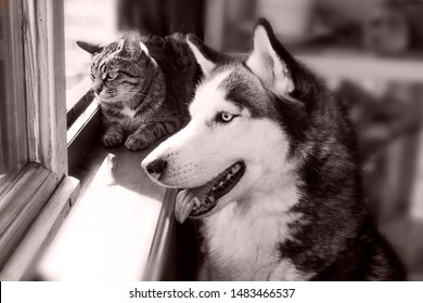cat and dog husky looking out the window into the street