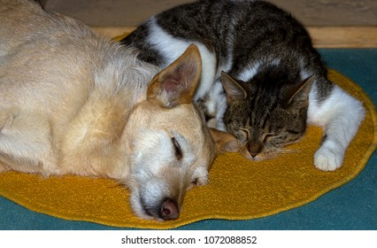 Cat and Dog, a Jack Russel Terrier, are sleeping together on the floor.