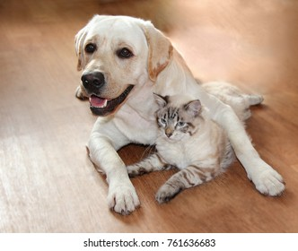 A cat and a dog jostle and love each other, cute hugs