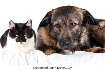 The cat and dog lie together. Isolated on white background