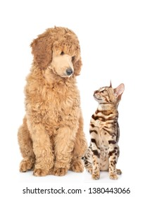 Cat and dog look at each other. Isolated on white background