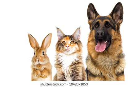 cat and dog looking on a white background isolated