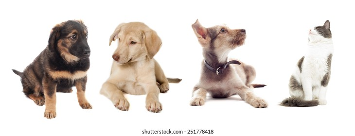 cat and dog looking up on a white background isolated
