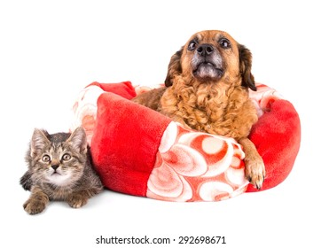 cat and dog looking up on white background