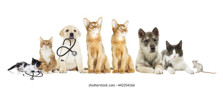 cat and dog looking on a white background