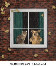The cat with the dog are looking through the window. The leaves falls outside. It's raining. The autumn has come.