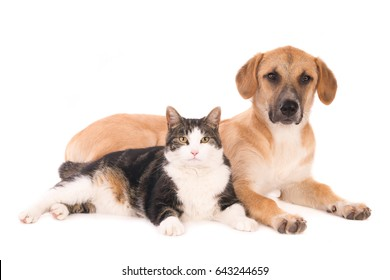 Cat and dog lying peacefully together. Isolated on white.