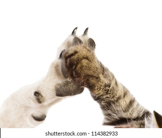 cat and dog making hi-five gesture. isolated on white background