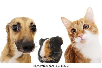cat and dog peeking
