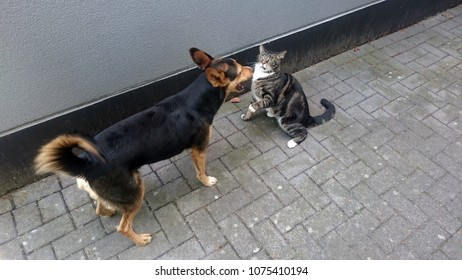 Cat and dog at play