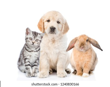 Cat, dog and rabbit sitting together in front view. isolated on white background
