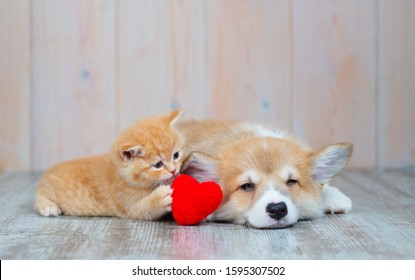 Cat and dog with red heart