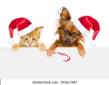 Cat and dog in red santa hats with Christmas candy cane looking out because of the poster. isolated on white background.