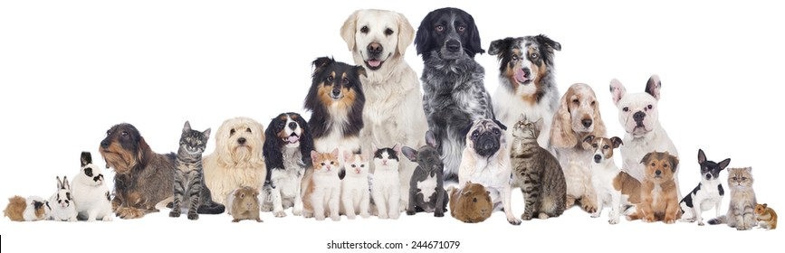 Cat and dog and rodent group