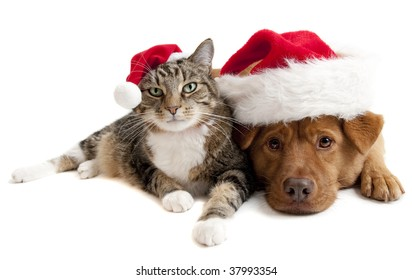 Cat and Dog with Santa Claus hats on white background