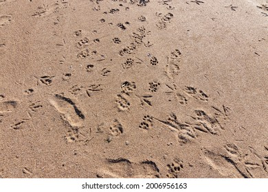 cat, dog, seagull and human footprints on the beach
