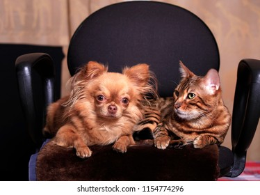 Cat and dog sit side by side, friends