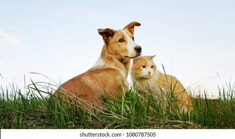 Cat and dog sitting together on the grass