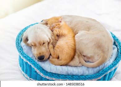 Cat and dog sleeping together in a basket. Kitten and puppy taking nap. Home pets. Animal care. Love and friendship.