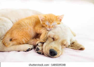 Cat and dog sleeping together. Kitten and puppy taking nap. Home pets. Animal care. Love and friendship.