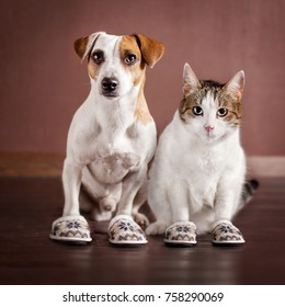 Cat and a dog in slippers. Friendship. Domestic life with pets