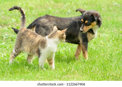 cat and dog are standing on the grass and look into each other's eyes. Beautiful animal friendship. Cat and dog love