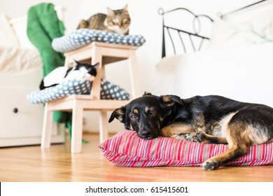 Cat and dog together in apartments