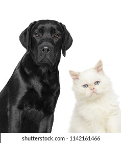 Cat and dog together, Close-up portrait isolated on a white background