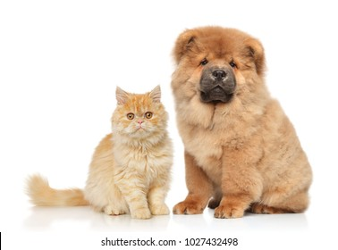 Cat and dog together in front of white background. Animal themes