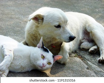 Cat and Dog together, image 1