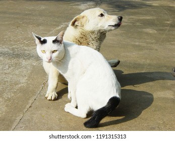 Cat and Dog together, image 2