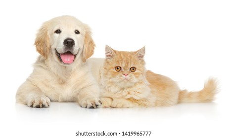 Cat and dog together lying on a white background. Animal themes
