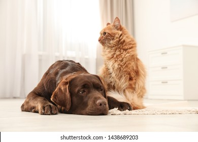 Cat and dog together on floor indoors. Fluffy friends