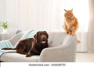 Cat and dog together on sofa indoors. Fluffy friends