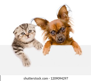 Cat and dog together over white banner. isolated on white background