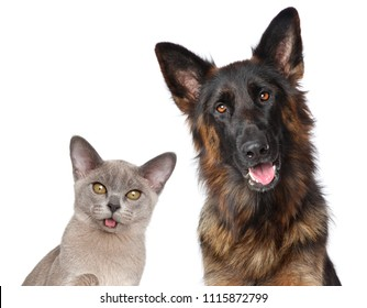 Cat and dog together posing isolated on white background. Animal themes