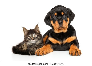 Cat and dog together posing on white background, front view