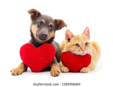 Cat and dog with a toy heart isolated on a white background.