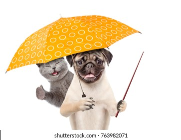 Cat and dog with umbrella and pointing stick. isolated on white background