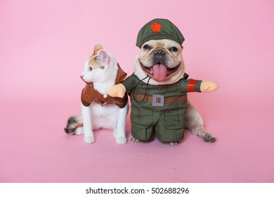 cat and dog wearing a  costume on isolated  pink background. hallowen  concept.
