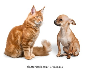 Cat and dog of white backgroind
