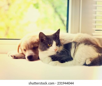 cat and dog at the window