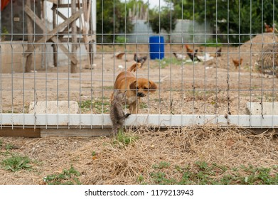 Cat and dog/Baby dog getting to know a cat cub through a fence that separates a countryside yard with domestic animals from the street.