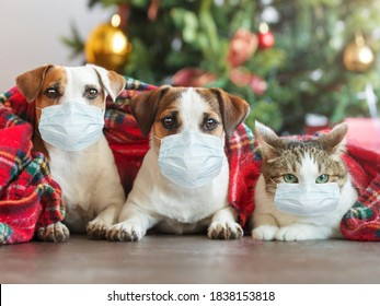 Cat and dogs under a christmas tree. Pets under plaid in mask. Coronavirus covid 19