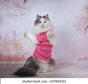 Cat doing yoga exercises