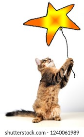 cat dreamer holding star shaped baloon in paws on white background