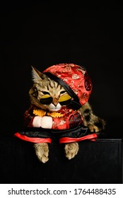 Cat dressed China outfit is in studio